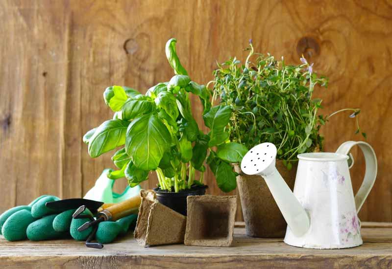 טיפול בגינה